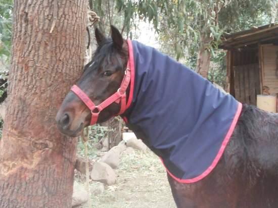 Cuelleras articulos para caballos for Accesorios para caballos